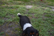 banksia-park-puppies-patricia-3-of-39