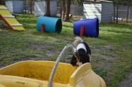 banksia-park-puppies-patricia-33-of-39