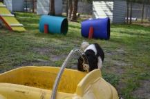 banksia-park-puppies-patricia-34-of-39