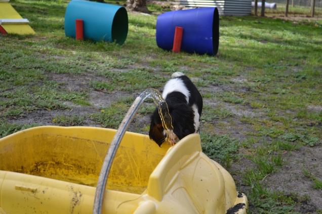 banksia-park-puppies-patricia-37-of-39