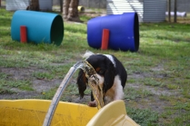 banksia-park-puppies-patricia-38-of-39