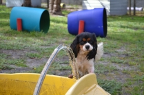 banksia-park-puppies-patricia-39-of-39