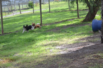 banksia-park-puppies-patricia-4-of-39