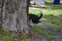 banksia-park-puppies-patricia-6-of-39
