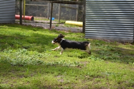 banksia-park-puppies-patricia-7-of-39