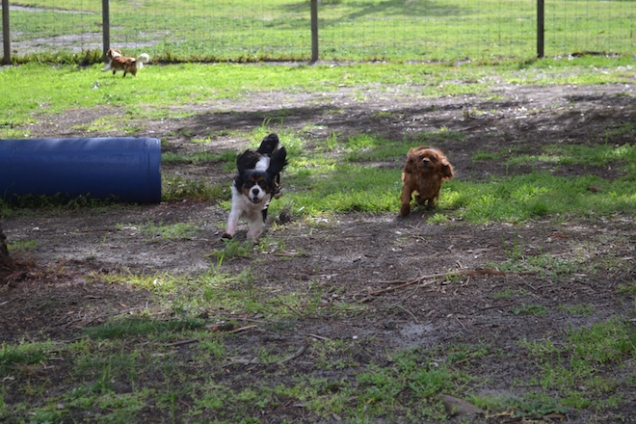 banksia-park-puppies-patricia-8-of-39