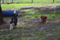 banksia-park-puppies-patricia-9-of-39