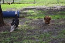 banksia-park-puppies-patricia-9-of-39