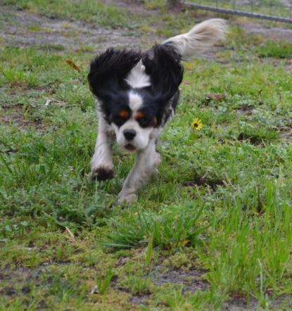 banksia-park-puppies-precious-1-of-31