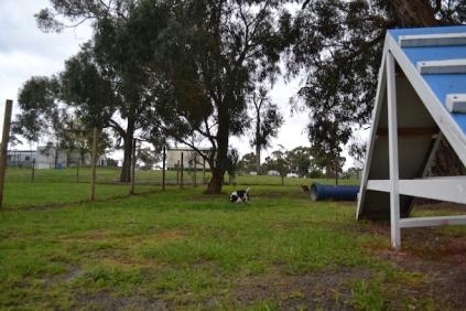 banksia-park-puppies-precious-11-of-31