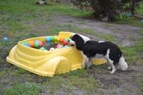 banksia-park-puppies-precious-23-of-31