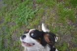 banksia-park-puppies-precious-28-of-31