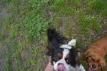 banksia-park-puppies-precious-30-of-31