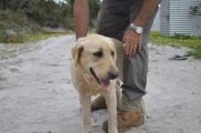 banksia-park-puppies-raspberri-10-of-11