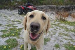 banksia-park-puppies-raspberri-5-of-11