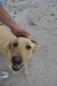 banksia-park-puppies-raspberri-6-of-11