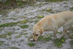 banksia-park-puppies-raspberri-7-of-11