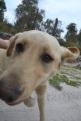 banksia-park-puppies-raspberri-9-of-11