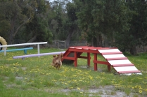 banksia-park-puppies-skyla-13-of-16