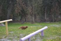 banksia-park-puppies-skyla-14-of-16