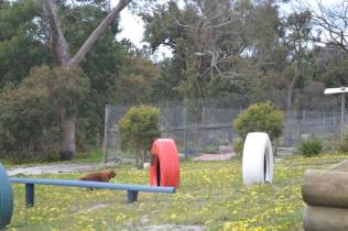 banksia-park-puppies-skyla-16-of-16
