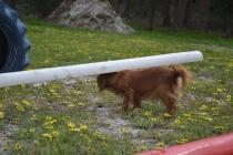 banksia-park-puppies-skyla-4-of-16
