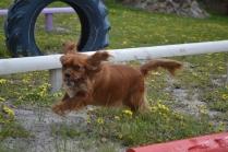 banksia-park-puppies-skyla-7-of-16
