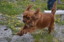 banksia-park-puppies-skyla-8-of-16