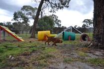 banksia-park-puppies-bunny-10-of-19