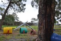 banksia-park-puppies-bunny-12-of-19