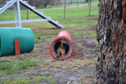 banksia-park-puppies-bunny-13-of-19