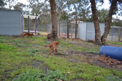 banksia-park-puppies-bunny-19-of-19