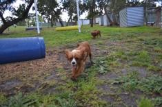 banksia-park-puppies-bunny-4-of-19