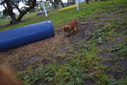 banksia-park-puppies-bunny-5-of-19