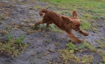 banksia-park-puppies-bunny-6-of-19