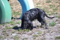 Banksia Park Puppies Jodel - 1 of 27 (10)