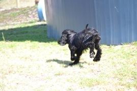 Banksia Park Puppies Jodel - 1 of 27 (12)