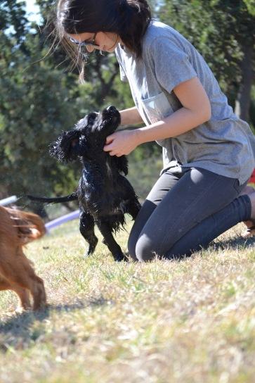 Banksia Park Puppies Jodel - 1 of 27 (15)