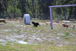 Banksia Park Puppies Jodel - 1 of 27 (19)