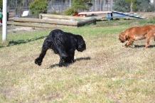 Banksia Park Puppies Jodel - 1 of 27 (24)
