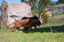 Banksia Park Puppies Jodel - 1 of 27 (4)