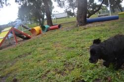 banksia-park-puppies-jodel-17-of-31