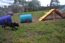 banksia-park-puppies-jodel-18-of-31
