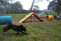 banksia-park-puppies-jodel-19-of-31