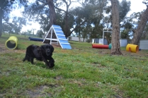 banksia-park-puppies-jodel-2-of-31