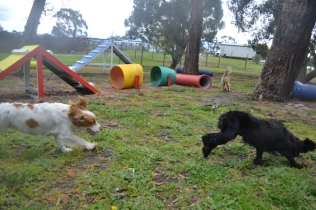 banksia-park-puppies-jodel-21-of-31