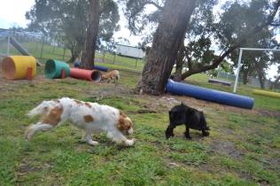 banksia-park-puppies-jodel-22-of-31
