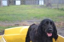 banksia-park-puppies-jodel-25-of-31