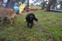 banksia-park-puppies-jodel-27-of-31