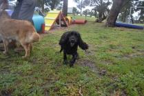 banksia-park-puppies-jodel-27-of-31